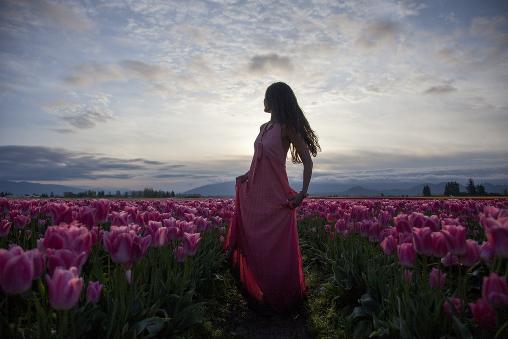 Sunrise in tulip field